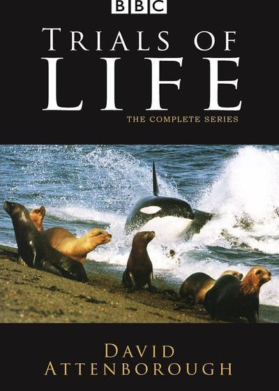 生命之源海报