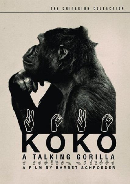 科科:会说话的大猩猩