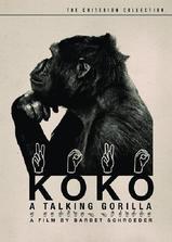 科科:会说话的大猩猩海报