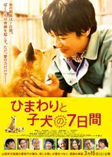 向日葵与幼犬的7天海报