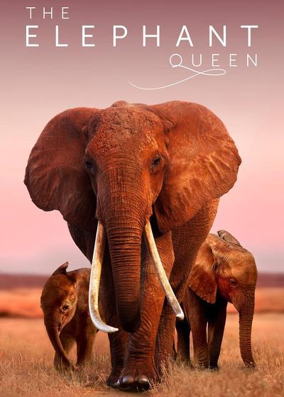 大象女王海报