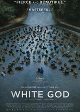 白色上帝海报