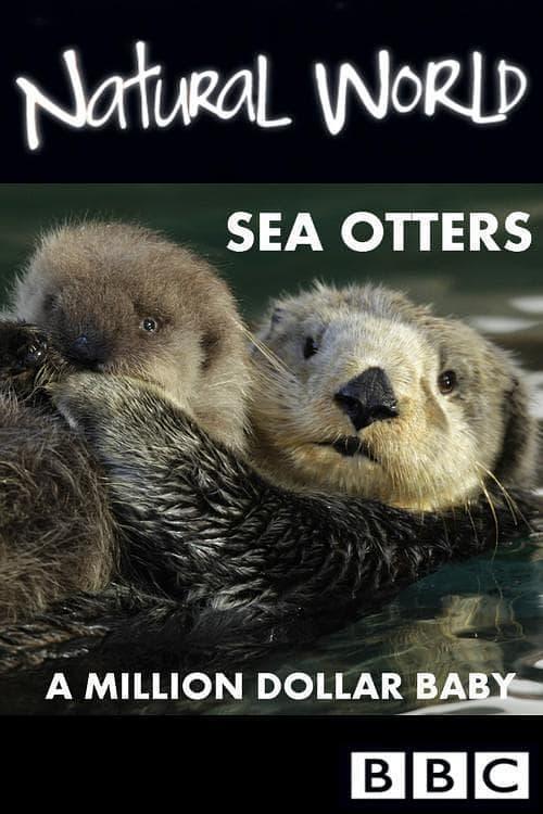 自然世界:海獭的百万宝宝
