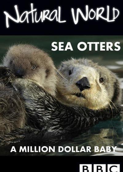 自然世界:海獭的百万宝宝海报
