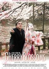 樱花盛开海报