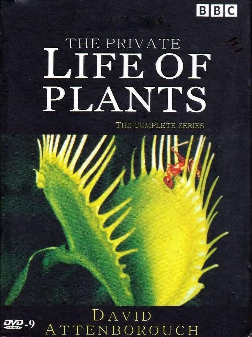 植物私生活