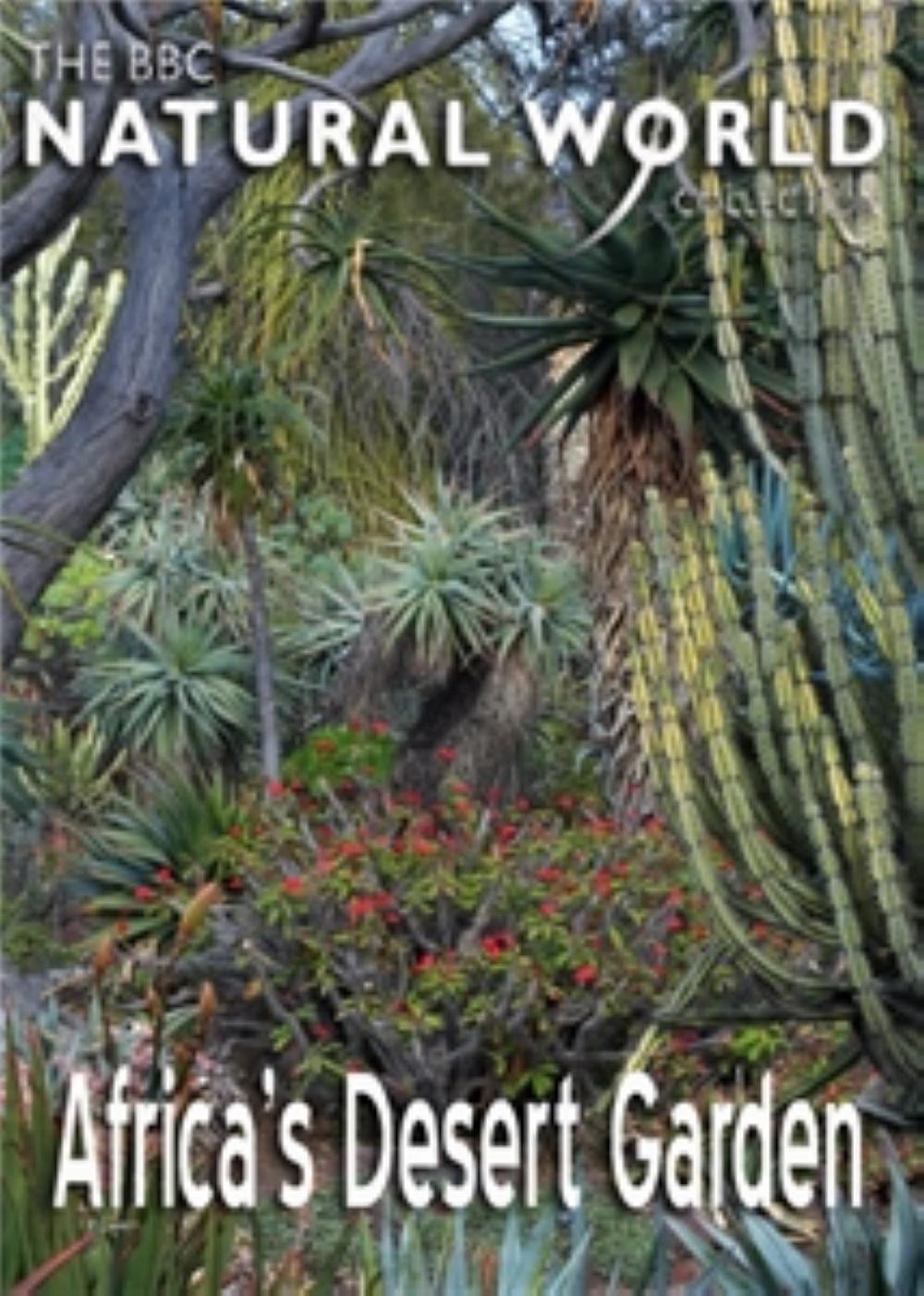 非洲沙漠花园