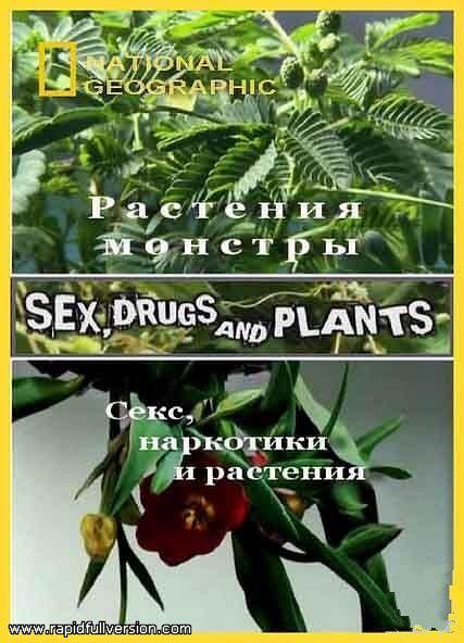 国家地理 植物的奥妙世界
