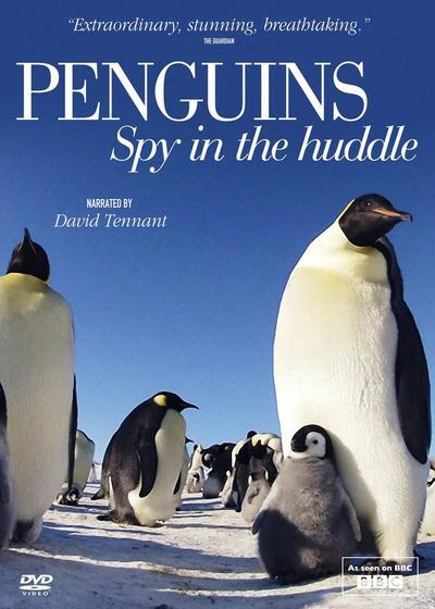 企鹅群里有特务海报
