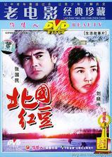 北国红豆海报
