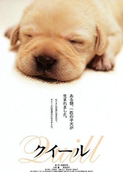 导盲犬小Q海报