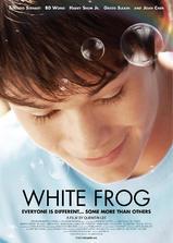 白色蛙海报