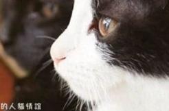 为什么猫都叫不来