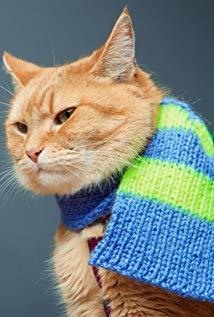 猫鲍勃 Bob the Cat演员