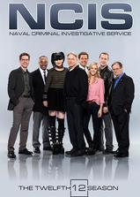 海军罪案调查处 第十二季海报