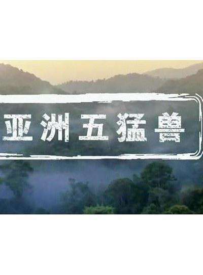 亚洲五猛兽海报
