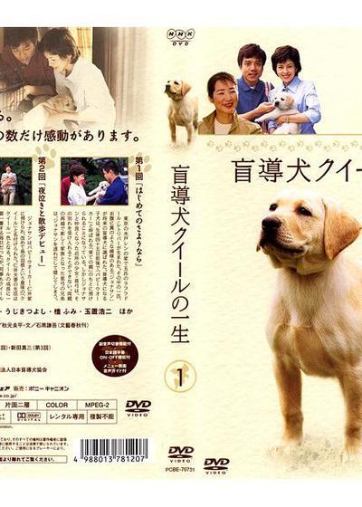 导盲犬小Q之一生海报
