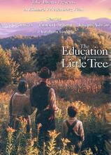 小树的故事海报
