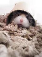 棺材与天竺鼠