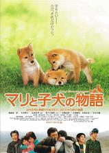 爱犬的奇迹海报