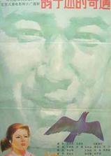 鸽子迷的奇遇海报