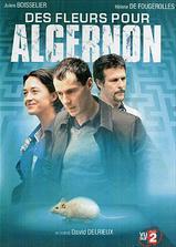 献给阿尔吉侬的花束海报
