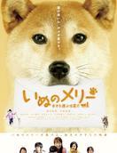 小狗Merry:承载幸福的传信犬
