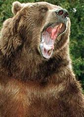 巴特熊 Bart the Bear