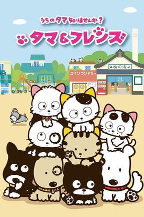 猫狗宠物街