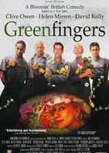 生命的绿色海报