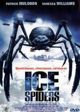 冰冻蜘蛛海报