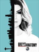 实习医生格蕾 第十三季