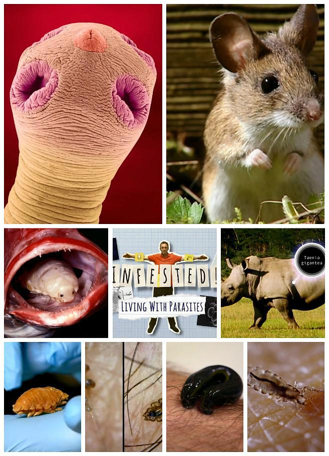 BBC: 与寄生虫共存