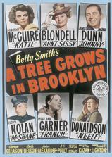 布鲁克林有棵树海报