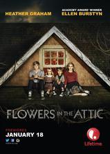 阁楼里的花海报