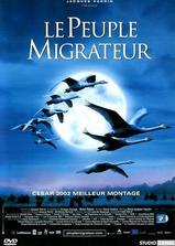 迁徙的鸟海报