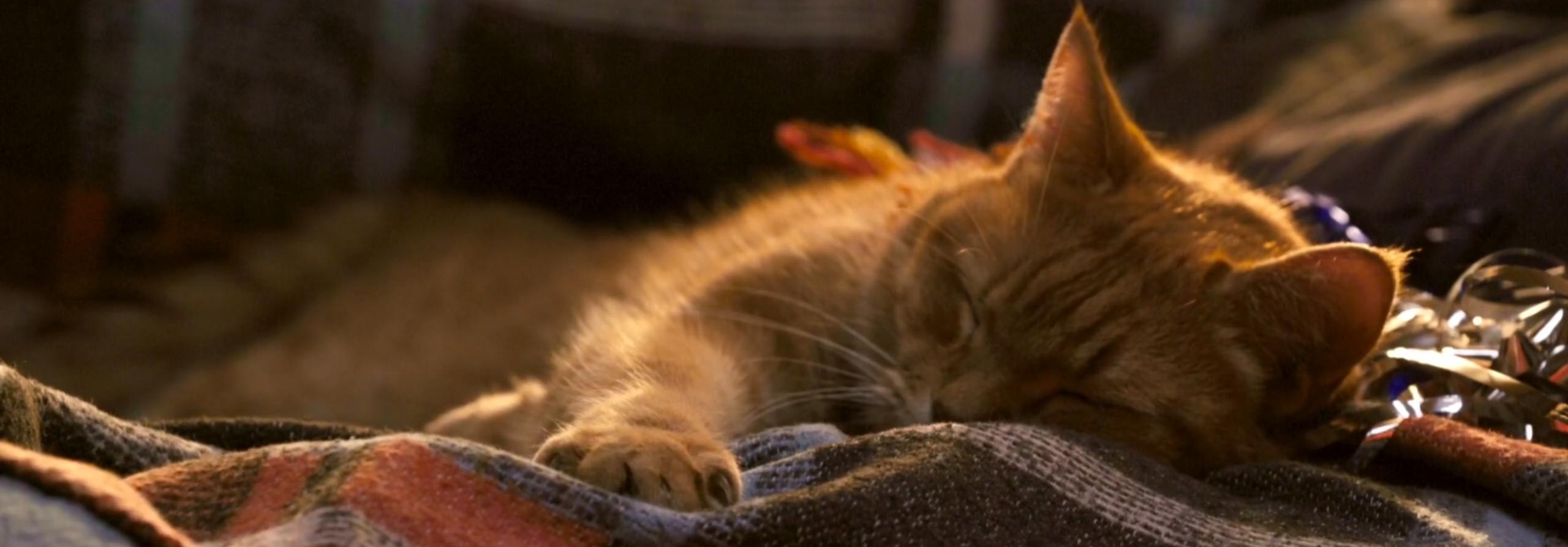 流浪猫鲍勃