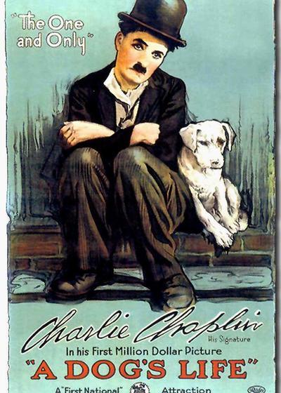 狗的生活海报