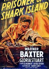 鲨岛逃生记海报