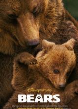 熊世界海报