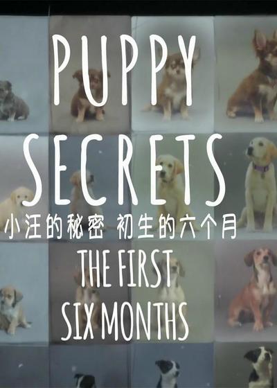 小汪的秘密:初生的六个月海报