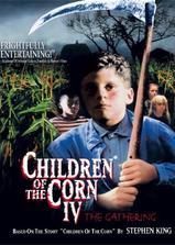 玉米地男孩4海报