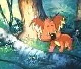毛富利,世界上最后一只树袋熊海报