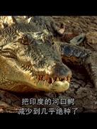 世界致命动物系列:印度篇