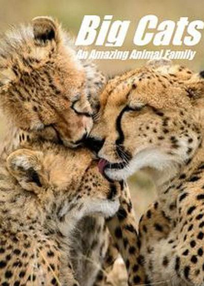 猫科动物:奇妙的动物家族